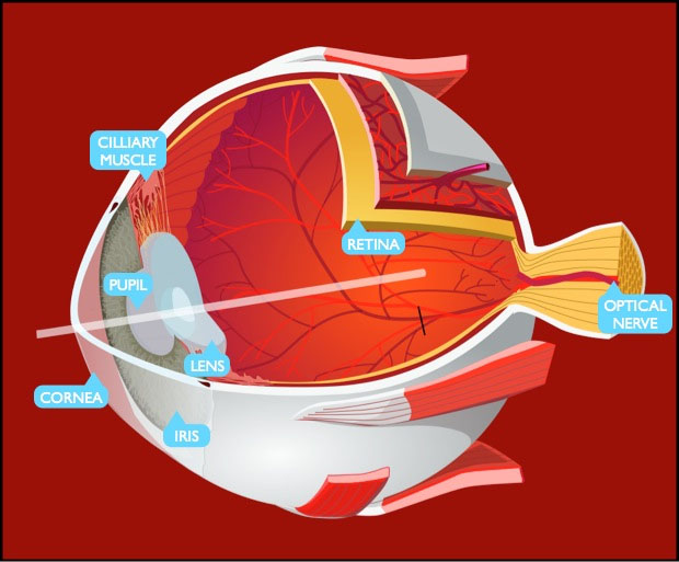 Occhio e fotocamera differenze e ISO